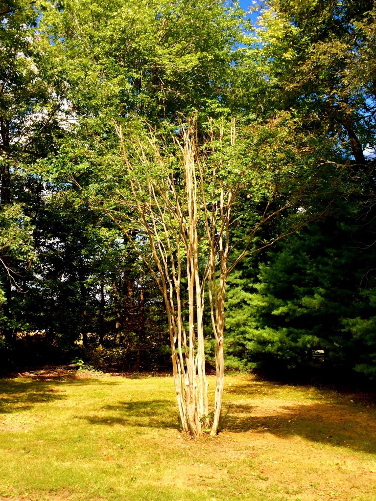 Local Tree Stump Removal Service Southern Maryland