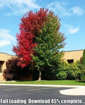 Tree Trimming Company Calvert County Md