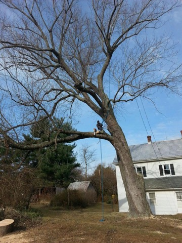 Tree Removal In Maryland