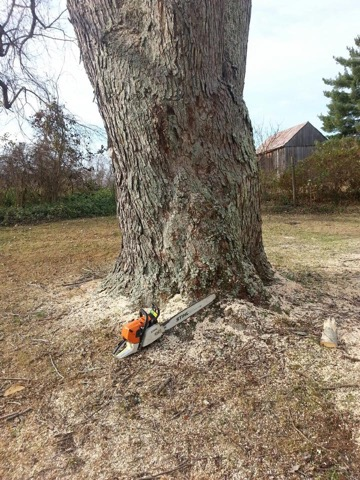 Tree Service Md