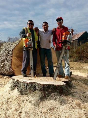 Tree Service Maryland