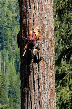 Tree Climbing Company Southern Md