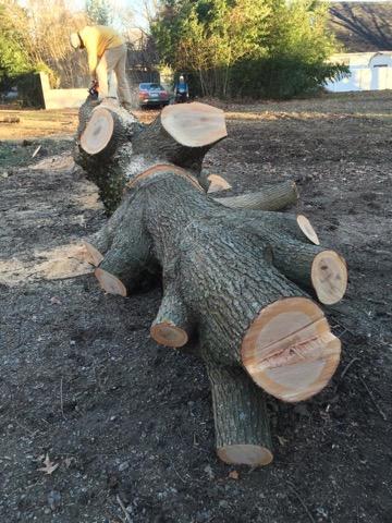 Cheap Tree Cutting Service