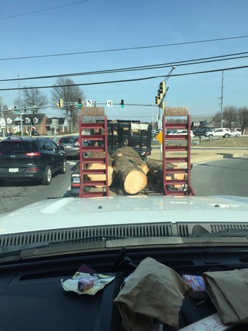 Large Tree Removal Calvert County Md