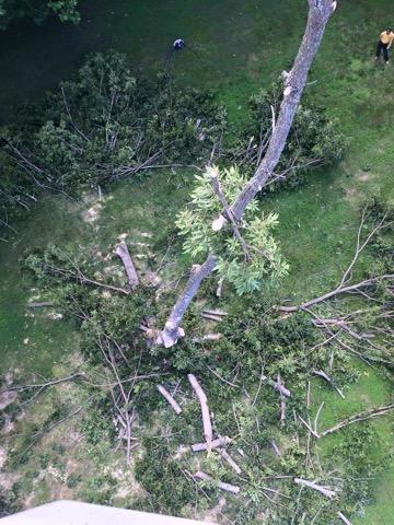 Cutting Trees In My Yard Lusby Md