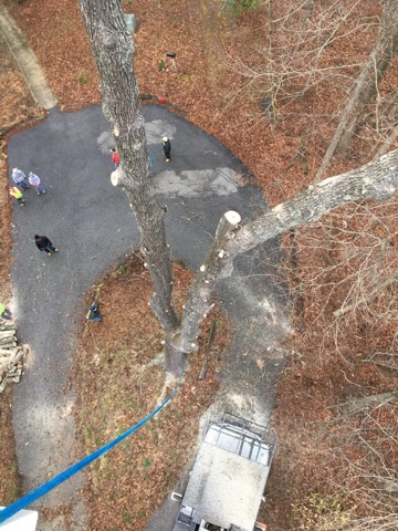 Dead Tree Removing