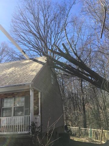 Calvert County Tree Removal Service