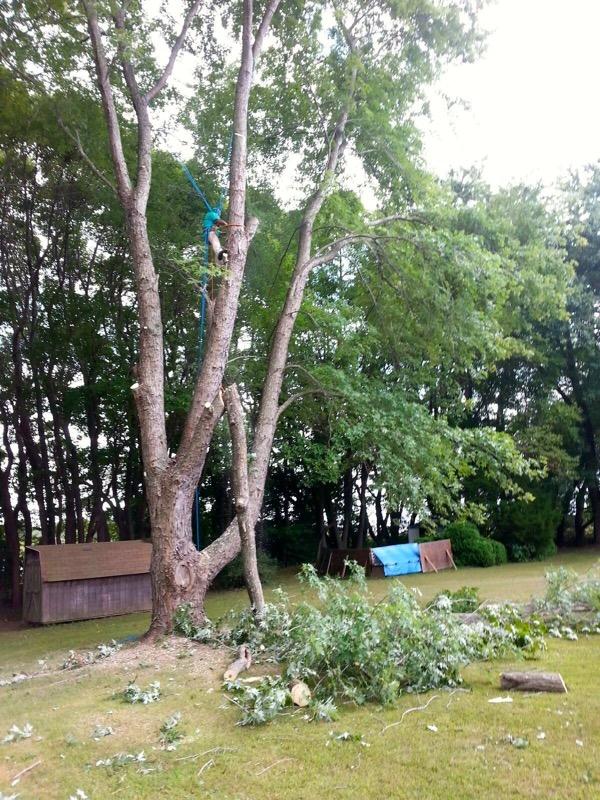 Local Tree Stump Removal Service
