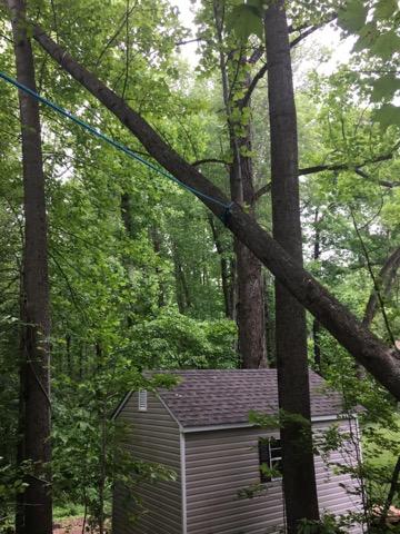 Fallen Tree In My Yard Prince Frederick Md