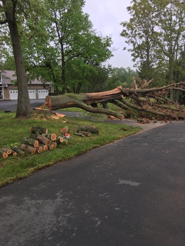 Tree Removal Services Calvert County