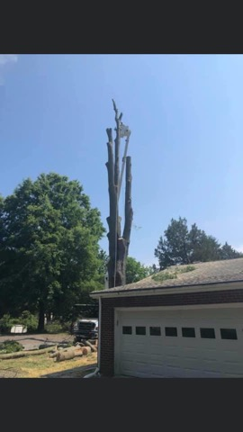 Tree Service In Maryland