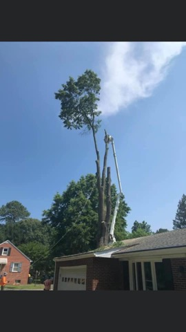 Md Tree Removal Today