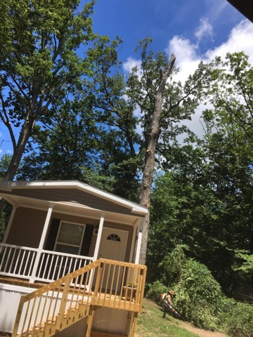 Tree Removal Today Southern Maryland