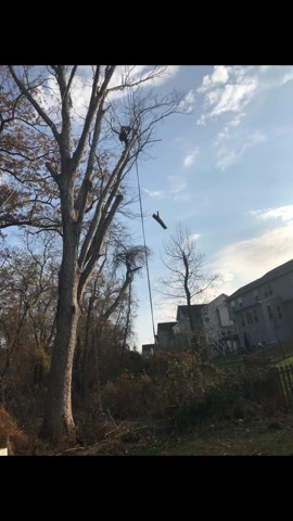 Southern Md Maryland Kellys Tree Removal Service