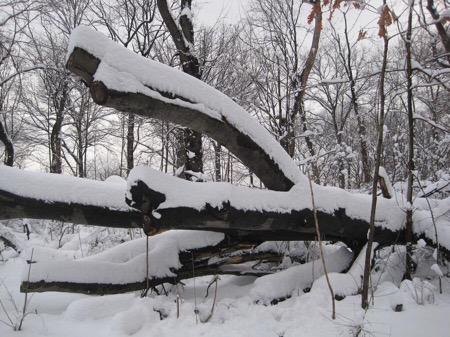 Kellys Tree Removal Service Md