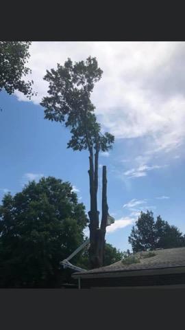 Maryalnd Tree Removal Company