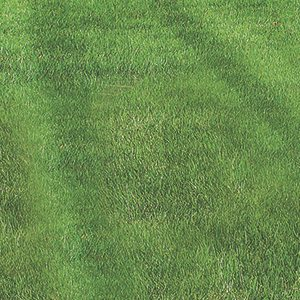 Seed And Sod Services
