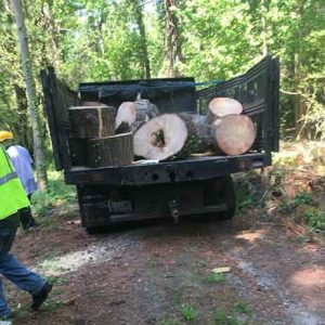 Best Stump Removal Company In Southern Md