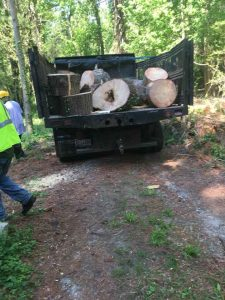Tree Cutting Service And Stump Removal