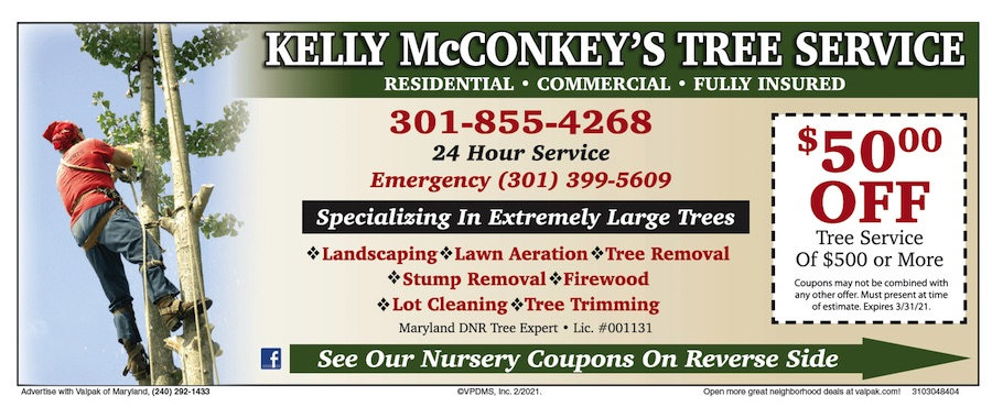 Tree Cutting Special Near Me
