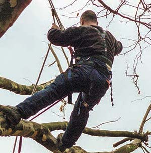 Tree Trimming Services Calvert County