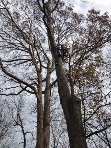 Southern Maryland Tree Service