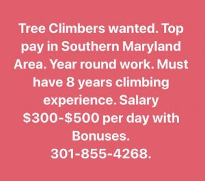 Help Wanted Tree Climbers Southern Md